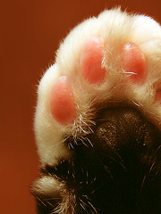 cat paw - by -sel