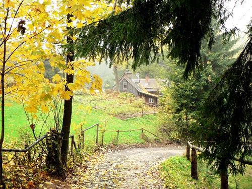 Hot Czech Woods