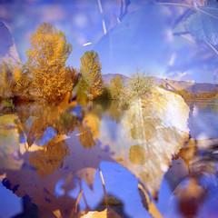 autumn morning (twb!) Tags: boulder colorado cootlake autumn leaves lubitel twinlens mediumformat doubleexposure