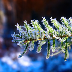 Frimas* (Imapix) Tags: voyage travel blue canada macro fall ice nature topf25 topc25 topv111 wonder photo colorful photographie natural crystal qubec favourites mostinteresting fir favs sapin glace imapix macropix topfavpix frimas gatangbourque gatanbourque copyright2006gatanbourqueallrightsreserved  copyright2006gatanbourqueallrightsreserved imapixphotography gatanbourquephotography