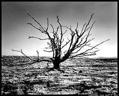 Thrive (Jeff T. Alu) Tags: desert black white dry lake mud bush tree surreal moody lonely dark outdoors bleak blackandwhite deserted illusion zen medetation medetate power impact graphic doom bright earthy dirt gritty intense visionary heat passion 4x4 remote california desolate dreamy nightmare euphoric