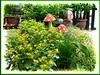 Melampodium divaricatum/paludosum (Butter Daisy)