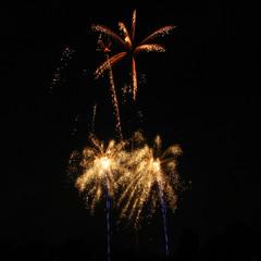 two palm trees (flappingwings) Tags: london guyfawkesnight bonfirenight fireworksnight guyfawkes fireworks night november5 november5th