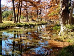 CYPRESS CREEK, Texas (Terry_Lea) Tags: reflection water creek texas cypresstrees cypresscreek abigfave
