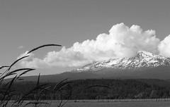 Mt Adams tries to hide (carolyn_in_oregon) Tags: mt adams mountain trout lake washington deleteme10