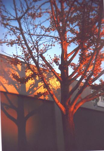 Tree at the farmer's market parking lot