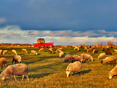 Pastoral* (Imapix) Tags: voyage travel sky canada nature field animals rural wonder lunch photo bravo picnic photographie quebec eating country agrarian rustic qubec pastoral simple campagne idyllic sheeps moutons sylvan bucolic arcadian provincial lateafternoon imapix brebis outland piquenique bucolique rurale countrified topfavpix agrestic gatangbourque gatanbourque copyright2006gatanbourqueallrightsreserved  copyright2006gatanbourqueallrightsreserved pix50 imapixphotography gatanbourquephotography