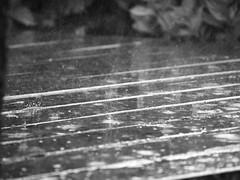 Spits (Catching Magic) Tags: nature rain storm original bw sky cloud tirau waikato newzealand olympus e300