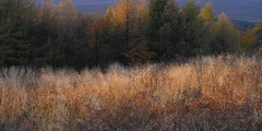 Below Stanage (Roger B.) Tags: autumn abstract texture derbyshire peakdistrict bestviewedlarge brushstrokes muted stanage darkpeak peakdistrictnationalpark mutedcolor