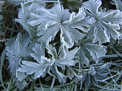 A winter's day, a bitter snowflake on my face (evilnick) Tags: frost jackfrost brrrr mrjackfrost