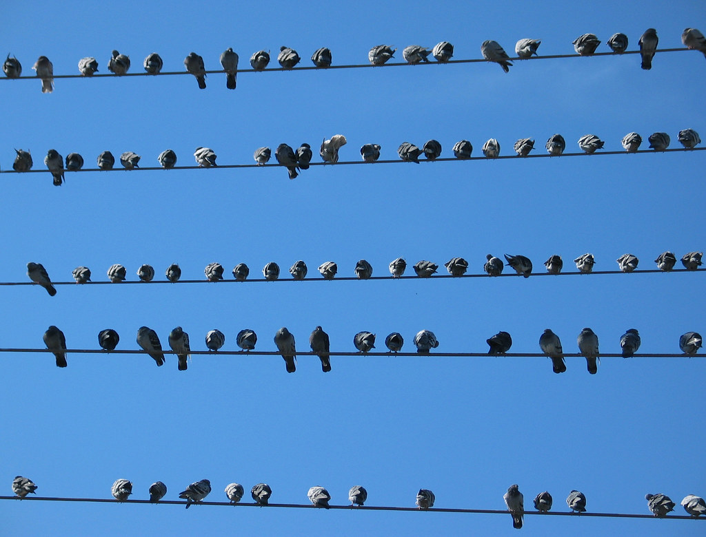 Birds on a Wire Redux