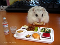 Have a Safe Trip *LiLi* (Seattle Roll) Tags: pet pets animal animals flight meal hamster rement campbell infightmeal