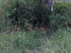 HPIM1440 (http://jvverde.birdsby.me/v2/) Tags: africa travel kenya frias safari viajes viagem lixo viagens vacations hollidays qunia lixo2
