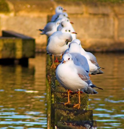 JuanJ 拍攝的 Birds in a line。