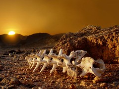 Surreal New year Pic from the deserts of Arabia (UmX) Tags: sun sunrise skeleton interestingness desert newyear bone expore