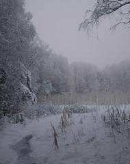 Forest (hkkbs) Tags: winter snow nature fog forest landscape vinter nikond70 sweden natur skog 100views 400views 300views 200views sverige nikkor westcoast snö manualfocus manfrotto monopod landskap dimma västkusten 28mmf28ais nikkor28mmais