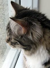 a new version of sunna birdwatching... (arny johanns) Tags: catsandwindows