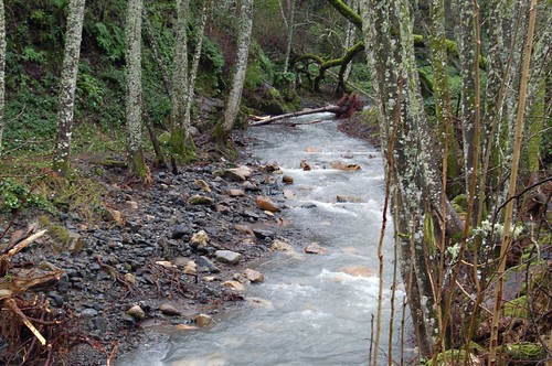 creek-here