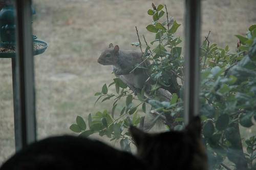 Squirrel Intruder