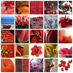 Beautiful Red! fave's. (mariekefotografeert) Tags: flowers red flower rouge interestingness fdsflickrtoys mosaic favorites natuur faves rood favorit genieten mozaik 245 favorieten mariekefotografeert flowerbulb interestingness240