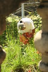 baro at saya (Farl) Tags: travel flowers woman colors garden dress philippines religion offering cebu tradition saya portals scapular piety baro baluster boljoon cebusugbo