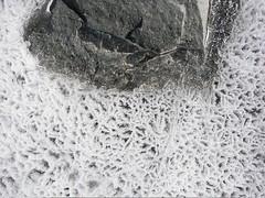 lakebonney-ice__29.jpg (miss_distance) Tags: lake ice stone antarctica ephemera textures ephemeral dryvalleys dryvalley icecracks candleice lakebonney icebubbles detailedviews mcmurdodryvalleys lter longtermenvironmentalresearch dryvalleyslter httporebodycom