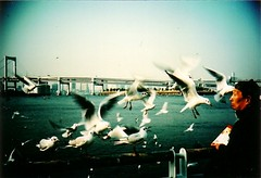 Seagull Feeding Frenzy (Lomodachi) Tags: seagulls birds japan tokyo amazing wings lomo lca xpro lomography crossprocessed crossprocessing   odaiba vignetting