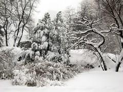 Snow scene, Central Park