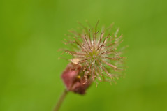 (nirak68) Tags: deutschland blüte ostholstein 149365 schleswigholsteinostholstein grebenhagen c2015karinslinsede