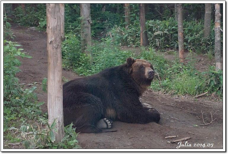 熊牧場 (4)