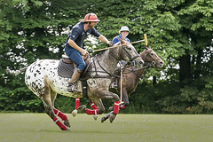 Polo-July2015-04 (Delta Skies) Tags: horses horse animal sport club outdoor yorkshire riding pony ponies polo equestrian equine tadcaster chukka toulston