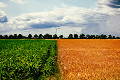 Maize and wheat (uw67) Tags: corn wheat feld wiese windrad rhein maize windturbine kleve getreide weizen flusslandschaft