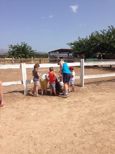Horses_The Paula Method_2