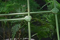 Will of Iron (BKHagar *Kim*) Tags: plants fern green metal yard bed backyard iron outdoor painted railing ferns babybed bkhagar