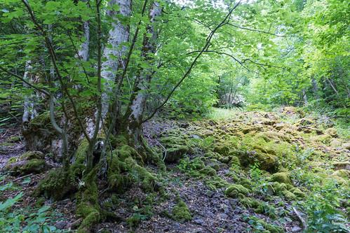 Le long du sentier vers la cascade du Nideck