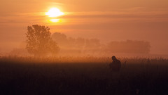 Photographer in the mist | Explored on 08.01.15 | Thank you all! (Pásztor András) Tags: morning mist color tree reed field grass yellow sunrise landscape photography nikon hungary silence serenity 1870mm calmness medow andras pasztor d5100