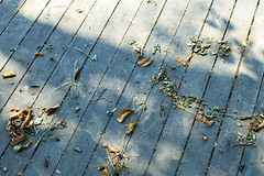 Autumn leaves on the floor (Alexander Matushenkov) Tags: autumn leaves yellow pier floor board