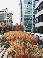 high line winter foliage. (howard-f) Tags: nyc newyorkcity cityscape urban urbanphotography iphone iphoneography thebigapple vsco vscoam iphone6plus manhattan urbanphotographer skyline giantbuildings buildingup architecture architecturalphotography highline chelseanyc fallcolor fallfoliage park urbanpark cappark landscapedesign landscapearchitecture elevatedpark