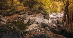 On the autumn forest... (Dimitar Balyamski) Tags: nature landascape mountains forest autumn bulgaria balkans balyamski