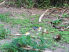DSCF0608 (cheico) Tags: 奄美大島 amamioshima