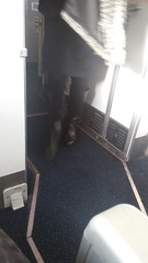 20161208_115057 (ph4eveh) Tags: candid flight attendant black boots tights secy legs woman
