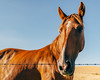 Sun Splashed (Pedalhead'71) Tags: parvin washington sunset horse fence colfax unitedstates us