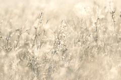 Il funambolo (margot 52) Tags: erba rugiada gelo inverno maxencefermine neige brina