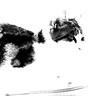cassie observing monochrome (PDKImages) Tags: cat black ragdoll monochrome pet animal feline blackcat asleep eyes calming