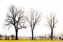 170125-IMG_0976.jpg (Rocco Fanello) Tags: paesaggio cusago landscape inverno cielo albero erba
