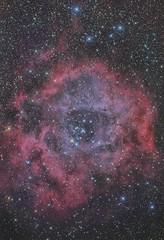 The Rosette Nebula (pintann57) Tags: cca250 d810a rosette nebula ngc2237 ngc2246