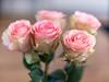 Roses (Arnaud Morin) Tags: home color nature flou bokeh nikon d750 55mm f12 nikkor france dijon xmas flower roses nikonflickraward