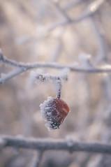 DSC_3803 (gabriella.hafner) Tags: winter cold hideg zúzmara hungary tél foggy macro nature