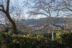 Ψίνθος (Psinthos.Net) Tags: fasouli fasuli fasoulipsinthos fasoulipsinthou fasoulivalley valley psinthosvalley nature countryside φύση εξοχή φασούλιψίνθοσ φασούλιψίνθου φασούλι κοιλάδαφασούλι κοιλάδα κοιλάδαψίνθου κοιλάδαψίνθοσ greenery fence wildivy άγριοσκισσόσ φράχτησ πρασινάδα φύλλα χειμωνιάτικαφύλλα φύλλαχειμώνα πεσμέναφύλλα winterleaves leaves fallenleaves iron σίδερο γαλάζιοσουρανόσ ουρανόσ σύννεφα νέφη clouds sky bluesky shacks italianshacks italianshack shack houses σπίτια παράγκεσ παράγκα ιταλικήπαράγκα ιταλικέσπαράγκεσ παλαιάκτήρια oldbuildings trees δέντρα πλάτανοι πλατάνοι πλατάνια ψίνθοσ psinthos planetrees mountain pinetrees forest δάσοσ πεύκα πεύκοι βουνό στέγεσ roofs light shadow φώσ σκιά απόγευμα afternoon
