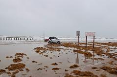 Padre Island National Seashore - Il a tenté, mais il n'est pas allé bien loin.... TX (Michele C_) Tags: padreislandnationalseashore texas usa usasuddutexasdegalvestonàfortdavis1avril2013